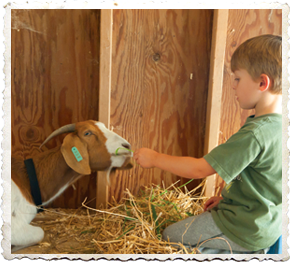Education Programs at Sakonnet Farm